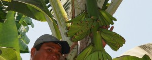 Photo courtesy of Equal Exchange Bananas.  Juan Carlos, agriculture expert, of CEPIBO cooperative explaining how bananas grow