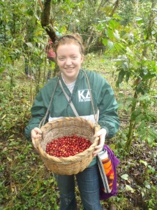 Coffee Bean Picking