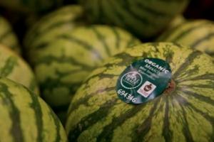 watermelonFT