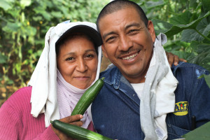 Rogelia Serna Cruz and husband Luis Angel Juarez Morales of Tapachula, Chiapa smile as they harvest Fair Trade-certified cucumbers.